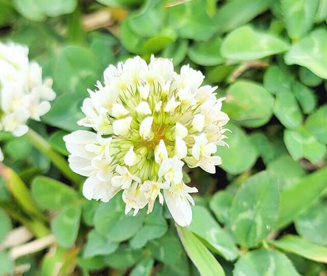 Galaxy S21 Ultra 5Gで撮った花の写真