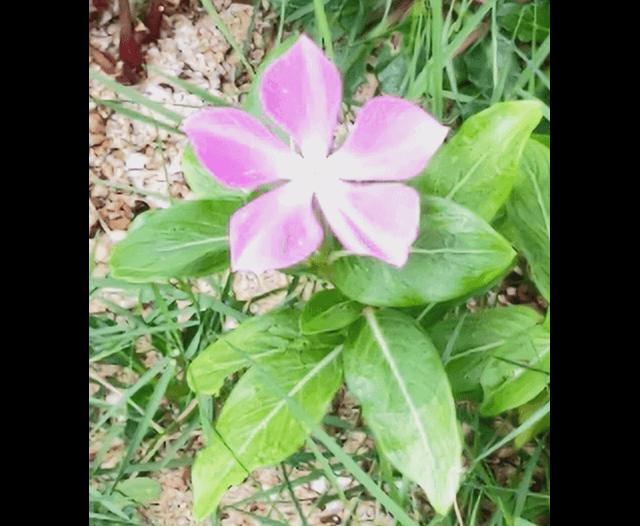 AQUOS R6で撮影した花