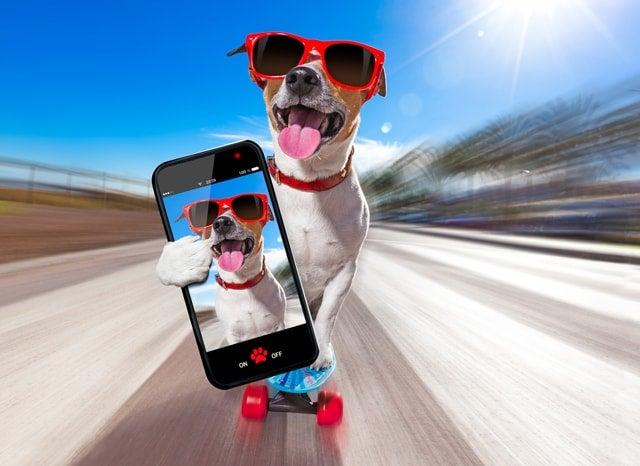 スケボーで走りながらスマホを持つ犬